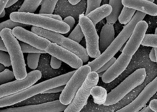 """研究称细菌可成为""""硬盘""""世代备份传递信息"""