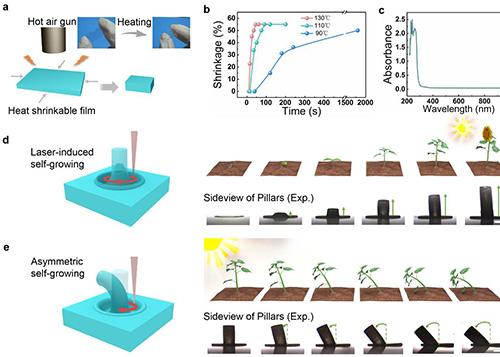飞秒激光诱导形状记忆聚合物自生长研究取得新进展